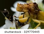 Ambush Bug Has Caught A Bee On...