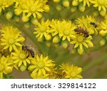 A Bee On Yellow Flowers With A...