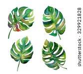tropical split leaves... | Shutterstock . vector #329921828