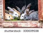 A Group Of Young Rabbits In Th...