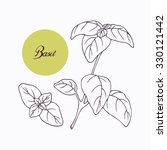 hand drawn basil branch with... | Shutterstock .eps vector #330121442