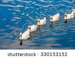 White Ducks Swimming In The...
