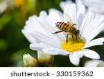Stock photo spring single daisy flower and bee 330159362