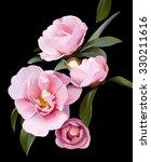 delicate bouquet of pink peony... | Shutterstock . vector #330211616