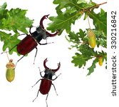 Small photo of Beetles of Lucanus cervus (Lucanidae) and Oak leaves isolated on a white background