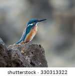 common kingfisher | Shutterstock . vector #330313322