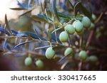 harvesting olives in sicily... | Shutterstock . vector #330417665
