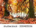 Autumn Tree  Deep Forest ...