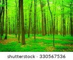 beautiful forest landscape in... | Shutterstock . vector #330567536