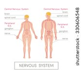 the nervous system of a human.... | Shutterstock .eps vector #330606548