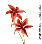 Flowers Red Lily Isolated On...