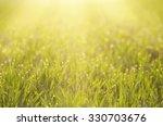 Sunny Green Grass  Field...