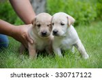 two puppy dog in the grass... | Shutterstock . vector #330717122