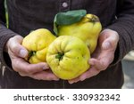 Hand Holding Yellow Pear Quinc...