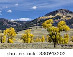 Fall Colors in Lamar Valley