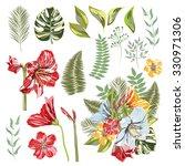 hippeastrum  liliales family .... | Shutterstock .eps vector #330971306
