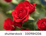 Stock photo detail of red roses in the garden 330984206