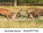 Red Deer   Fighting Of Two...