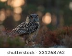 Eagle Owl Sitting In The Wood...