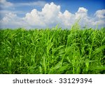 Cornfield With Clouds On Brigh...