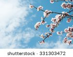 Beautiful Almond Blossoms  Blu...