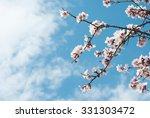 Beautiful Almond Blossoms  Blu...