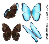 Set Of Natural Blue Morpho...