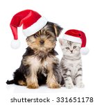 Stock photo little kitten and puppy in red christmas hats sitting together isolated on white background 331651178
