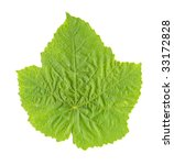 Grape Leaf isolated - stock photo
