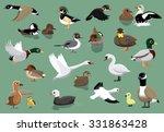 Us Ducks Cartoon Vector...