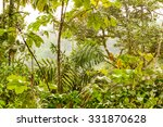 Dense Vegetation In Ecuadorian...
