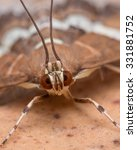Close Photo Of Moth Shows...