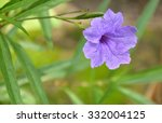 shot of violet flower is... | Shutterstock . vector #332004125