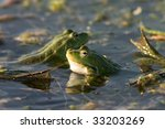 Two Frogs In A Lake