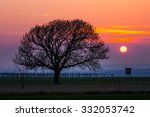 Beautiful Tree Silhouette At...