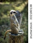meerkat | Shutterstock . vector #332180138