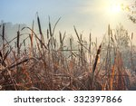 reeds in the swamp in the early ... | Shutterstock . vector #332397866