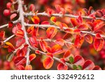 closeup of autumnal leaves of
