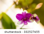 purple  orchid flowers on... | Shutterstock . vector #332527655