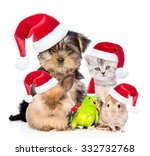 Stock photo large group of pets in red christmas hats isolated on white background 332732768