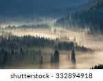 Fir Trees On A Meadow Down The...
