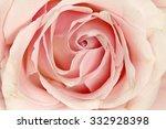 A Closeup Of Pink Rose.