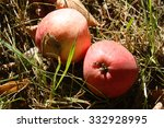 two apples | Shutterstock . vector #332928995
