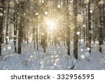 Winter Forest. Firewood Stacke...