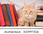 Cute Little Cat On Shelf With...