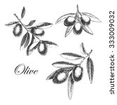 vector olive branch hand drawn...   Shutterstock .eps vector #333009032