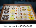 Small photo of 23. 07. 2015 LONDON, UK, Natural History museum - Insects once owned by Alfred Russel Wallace who co - discovered the theory of evolution by natural selection with Charles Darwin