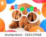 A Irish Setter Puppy Wearing...