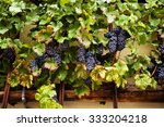 The Worlds Oldest Grape Vine I...