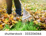 Gardener Raking Fall Leaves In...